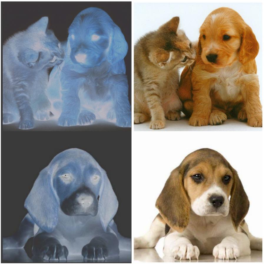 PicMonkey Collage.jpg.jpg